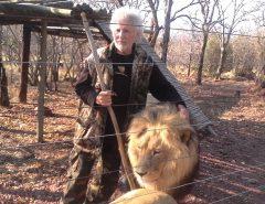 Sul-africano é atacado e morto por leões que criava em cativeiro