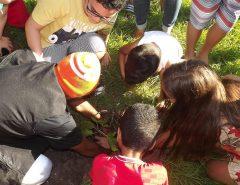 Fotos: Comemoração do Dia da Árvore no Museu Solar Ferreiro Torto