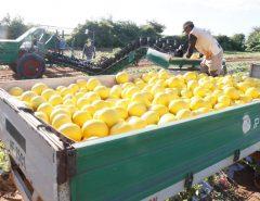 Fruticultura potiguar conquista mercado chinês e deve gerar mais 10 mil empregos
