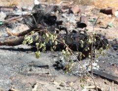 187ª: Corpo de um homem completamente carbonizado e apresentando marcas de pancada na cabeça é encontrado na zona rural de Mossoró.
