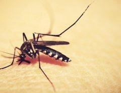 Conheça os 4 tipos de dengue que circulam pelo Brasil