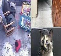 Gato salva bebê e o impede de cair de escada: Assista o vídeo