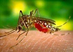 Estudo de cientistas brasileiros diz que zika inibe tumor de próstata