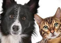 Comissão de Justiça da Câmara Municipal aprova projeto com foco na proteção aos animais