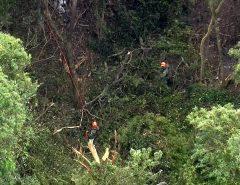 Avião de pequeno porte cai na Serra da Cantareira em SP