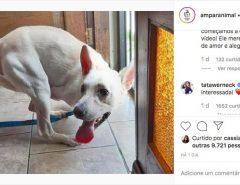 Emoção: Cachorro com deficiência abandonado em São Leopoldo tem 20 interessados na adoção