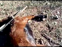 Cabra é encontrada morta com sinais de estupro e espancamento na região de Catolé do Rocha