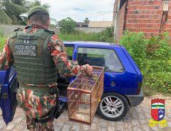 CIPAM realiza apreensão de 55 aves e detém 29 pessoas por crime contra a fauna