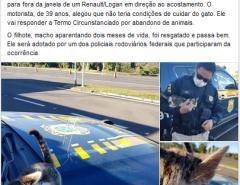 Herói: Policial flagra gato sendo arremessado de carro, autua condutor e adota o filhote