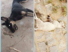 MALDADE: Em meio a pandemia, envenenamento de animais em São João do Sabugi(RN) continua escancarado