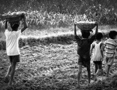 Supremo decide que tempo de trabalho infantil vale para aposentadoria