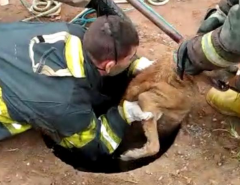 Em Extremoz, Bombeiros resgatam cachorro que caiu dentro de bueiro