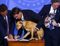 EXEMPLO A SER SEGUINDO: Lei aumenta pena para maus-tratos a cães e gatos