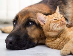 CADEIA NELES: Projeto que aumenta punição para quem maltratar cães e gatos é aprovado no Senado e segue para sanção presidencial