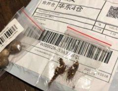 CUIDADO: Pacote chinês com sementes misteriosas chega na casa de brasileiros e autoridades emitem alerta