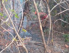 Chapada dos Veadeiros: maior parte do incêndio é controlado