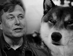 ECONOMIA: Endereço com 36 bilhões de dogecoins envia mensagens secretas para Elon Musk