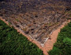MUNDO: Bancos chineses são os que mais financiam o desmatamento no mundo, diz relatório